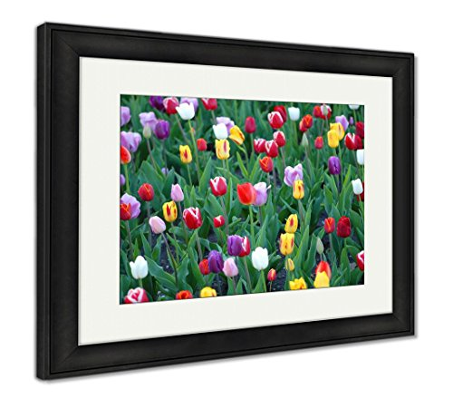 A Cropped Image from A Field of Tulips Grown in Kansas City Missouri, Wall Art Home Decoration, Color, 26x30 (Frame Size), Black Frame, AG6418477 ()
