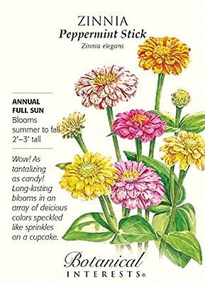 Peppermint Stick Blend Zinnia Seeds - 750 mg