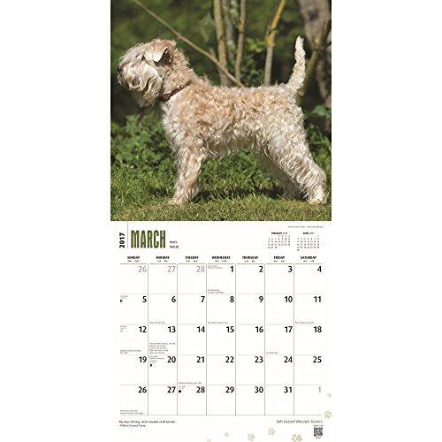 "Soft Coated Wheaten Terriers 2017 Wall Calendar, 12"" x 12"" Photo #2"