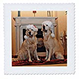 3dRose Sandy Mertens Christmas Animals - Two Golden Retrievers in Santa Hats by the Fireplace - 18x18 inch quilt square (qs_269522_7)