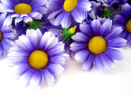 (24) Silk Purple White Edge Gerbera Daisy Flower Heads , Gerber Daisies - 1.75