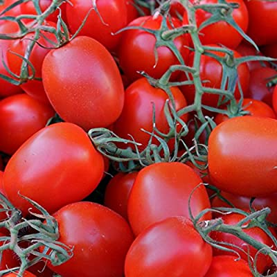 Tomato Garden Seeds - Rio Grande Seeds - Non-GMO, Heirloom, Vegetable Gardening Seed
