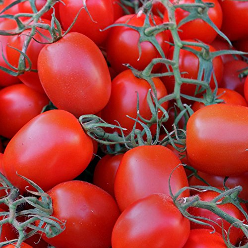Tomato Garden Seeds - Rio Grande - 1 Lb Bulk - Non-GMO, Heirloom, Vegetable Gardening Seed