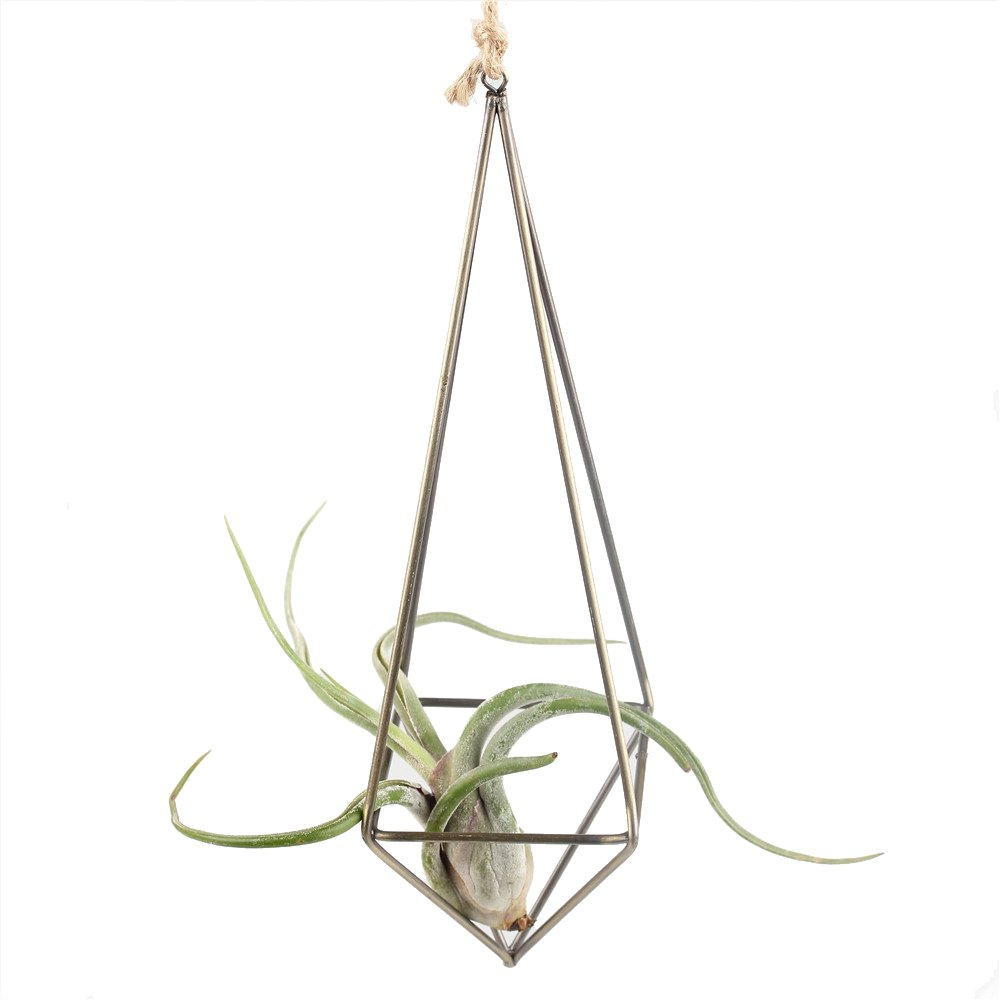 NCYP Rustic Style Freestanding Hanging Metal Tillandsia Air Plant Rack Bronze Color 10 inches Height Quadrilateral Pyramid Shape Geometric No Plants