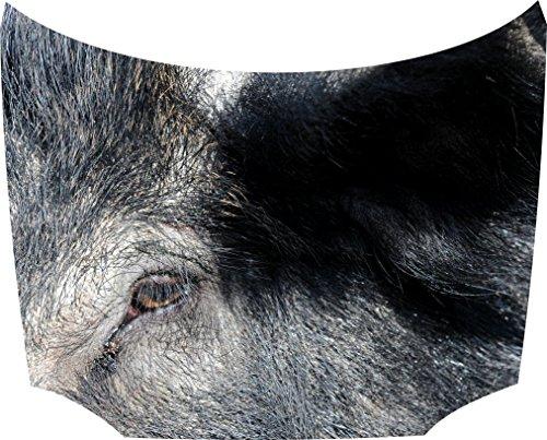 Bonnet Sticker Wild Hog: