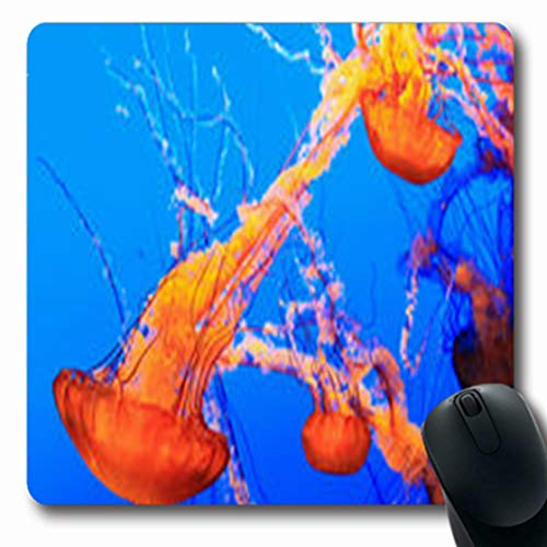 Pandarllin Mousepads Pacific Sea Nettle Chrysaora Marine Fuscescens Wildlife Jellyfish Nature Oblong Shape 7.9 x 9.5 Inches Oblong Gaming Mouse Pad Non-Slip Rubber Mat