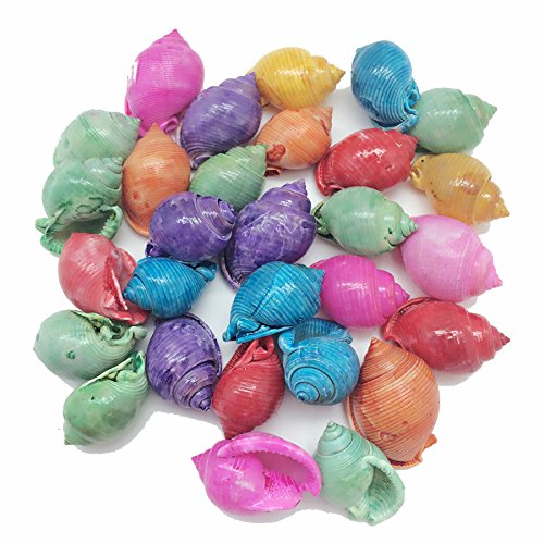 PEPPERLONELY 20PC Dyed Assorted Colors Bonnet Sea Shells, 1-1/2 Inch ~ 2 Inch ()