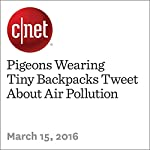 Pigeons Wearing Tiny Backpacks Tweet About Air Pollution | Michelle Starr