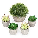 Artificial Succulent Plants Potted - Fake Succulents - Set of 5 - Home, Bath, Office Decor Gift - Faux Potted Plants - Assorted Artifical Decorative centerpieces Plants in Pots for Table