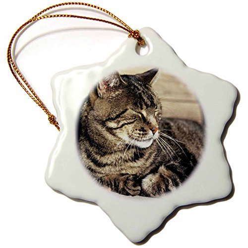3dRose orn_94870_1 Utah Capitol Reef Sleeping Tabby Cat Ric Ergenbright Snowflake Decorative Hanging Ornament, Porcelain, 3-Inch