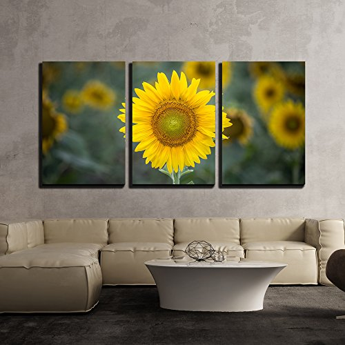 3 Piece Canvas Wall Art - Closeup of Sunflower in Field - Modern Home Decor Stretched