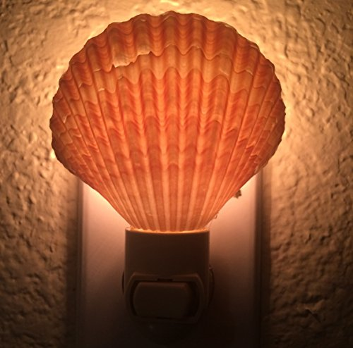 PEPPERLONELY Yellow Mexican Cup Sea Shells Night Light, Shell Size 2-1/2 Inch ~ 3-3/4 Inch