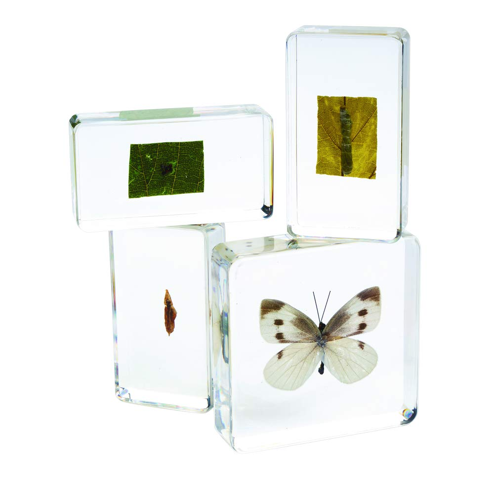 Excellerations ACLIFE Acrylic Life Cycle Specimens (Pack of 4)