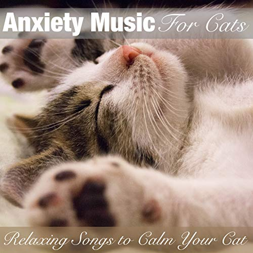 (Anxiety Music for Cats: Relaxing Songs to Calm Your Cat)