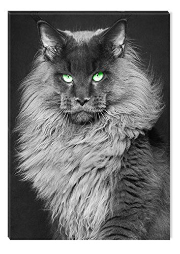 Startonight Canvas Wall Art Black and White Abstract Cat Queen