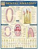 Dental Anatomy
