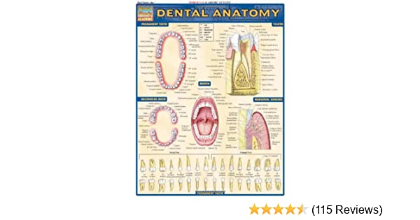Oral Anatomy Guide - User Guide Manual That Easy-to-read •