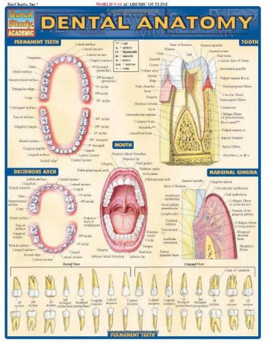 dental-anatomy-quickstudy-academic