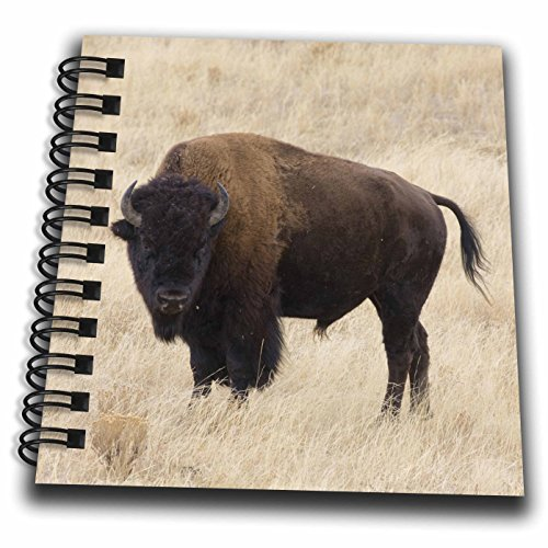 Price comparison product image 3dRose db_97419_3 Wyoming, Yellowstone NP, Bison in Lamar Valley-US51 JWI0359-Jamie and Judy Wild-Mini Notepad, 4 by 4""