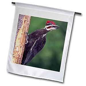 Danita Delimont - Birds - Pileated Woodpecker bird, Pennsylvania - NA02 DNO0178 - David Northcott - 12 x 18 inch Garden Flag (fl_83839_1)