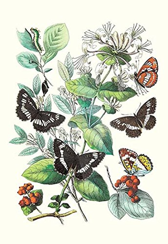 Butterflies: N. Lucilla, L. Sibylla Art Print on Canvas