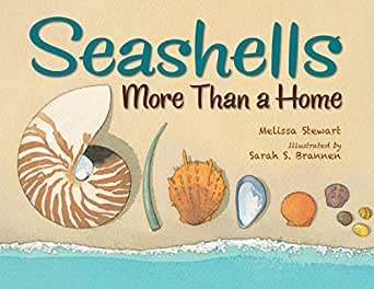 Seashells more than a home kindle edition by melissa stewart childrens ebooks fandeluxe
