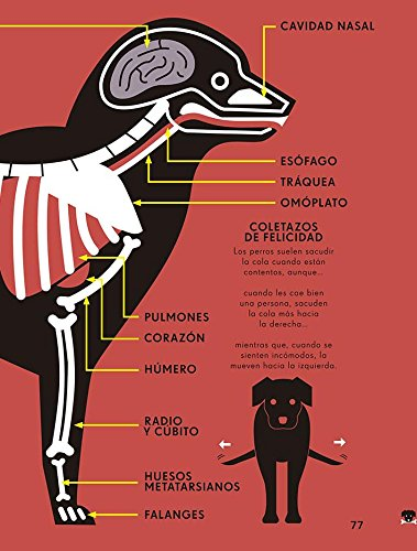 El reino animal: Nicholas / Rogers, Simon Blechman: 9788494741821: Amazon.com: Books