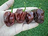 (1000) Trinidad 7 Pot (7-Pod) DOUGLAH Pepper SeedsWHOLESALE