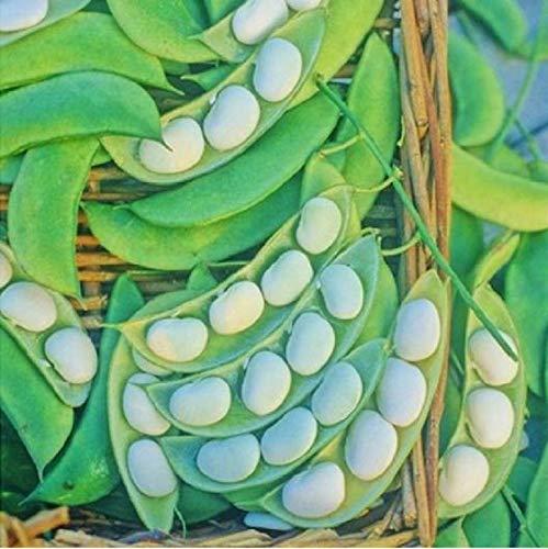 David's Garden Seeds Bean Lima Burpee Improved SL4587 (Green) 100 Non-GMO, Heirloom Seeds