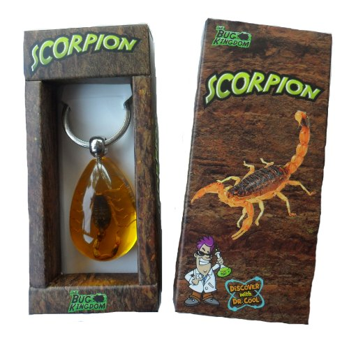 discover-with-dr-cool-real-scorpion-key-chain