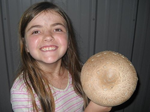 Crimini ~ Portabella ~ Baby Bella Mushroom Growing Kit makes it EASY to grow your own FRESH Mushrooms!