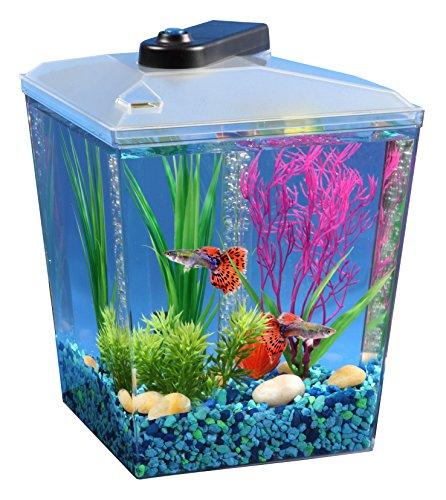 (Koller Products AquaScene 1-Gallon Fish Tank with LED Lighting and Natural Biological Filtration)
