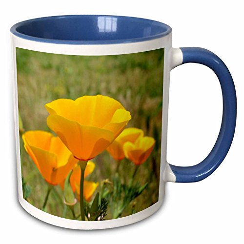- 3dRose 30452_6 California Orange Poppies Field Flower Photograph-Two Tone Blue Mug, 11-Ounce, Multicolored