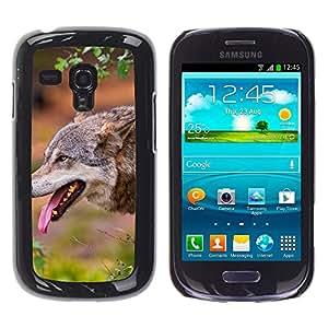 Print Motif Coque de protection Case Cover // M00313048 Mia Gato animal del parque zoológico de // Sony Xperia C3 D2533/ C3 Dual D2502