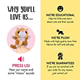 Plush Creations Plush Cat Toys For Kids Includes
