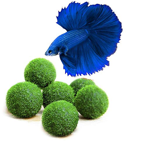 Luffy Nano Neon Tetras Ball, 0.4-inches, Live Round-Shaped Marimo Plant, Toys for Betta Fish, Hiding, Rolling, Nibbling, Cleans Aquarium Water & Adds Aesthetic Value to Betta Bowls and Jars, 6-Pieces from Luffy