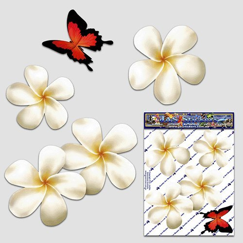 Frangipani plumeria small white double flower butterfly animal pack car stickers st00024wt sml jas