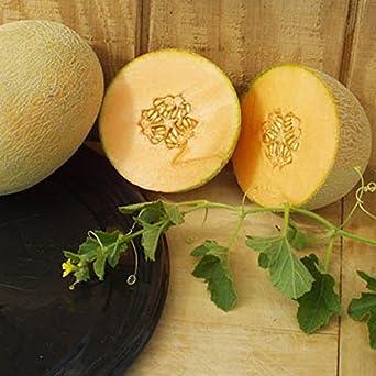 PLAT FIRM Semillas DE GERMINACION: 50 - Semillas: Goddess Hybrid Melon Cantaloupe Seeds- Â¡Sabor excepcionalmente Dulce y jugoso!