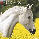 Just Horses 2020 Calendar