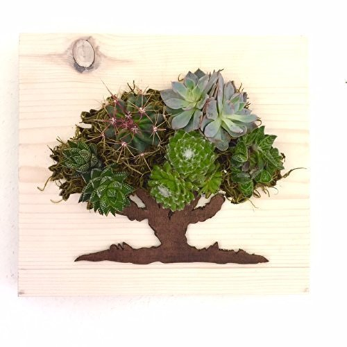 Oak Tree Succulent + Cacti Vertical Garden || Living Wall || Wall Planter || Hanging Planter