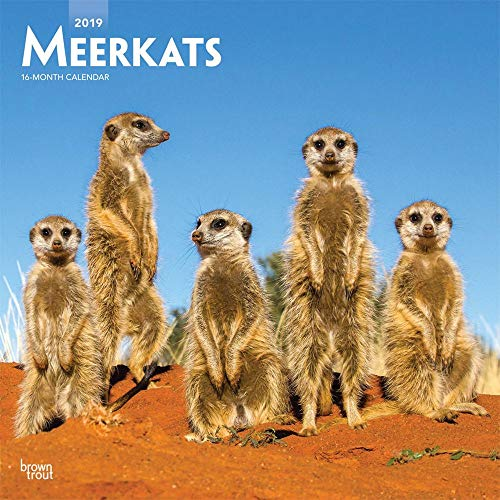 2019 Meerkats Wall Calendar, by BrownTrout