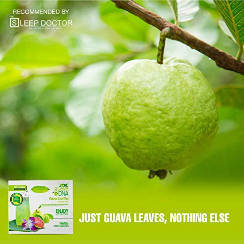Guava Leaf Tea (360 Guava Leaf Tea Teabags) by MatchaDNA (Image #5)