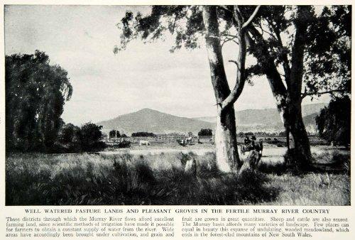 1938-print-murray-river-australia-rural-farmland-pasture-scenic-countryside-tree-original-halftone-p