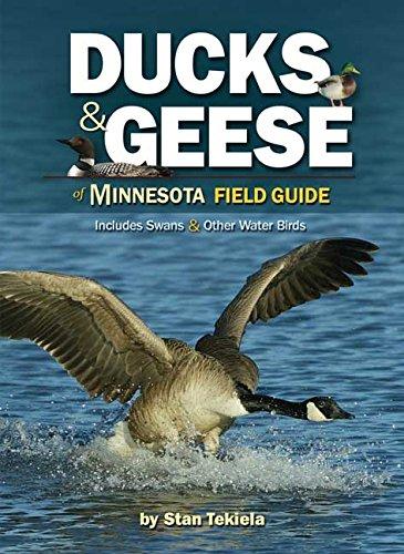 Ducks & Geese Of Minnesota Field Guide (Bird Identification Guides)