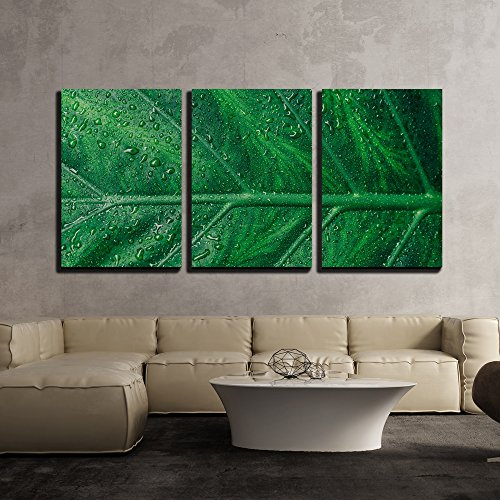 Framed Iii Canvas (wall26 - 3 Piece Canvas Wall Art - Beautiful Green Leaf with Shiny Drops - Modern Home Decor Stretched and Framed Ready to Hang - 24