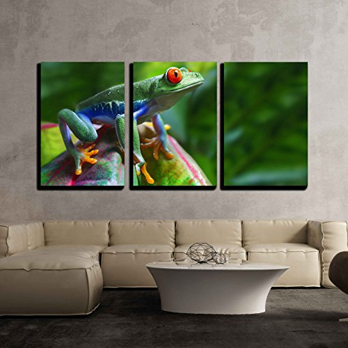 - wall26 - 3 Piece Canvas Wall Art - Red-Eyed Tree Frog - Modern Home Decor Stretched and Framed Ready to Hang - 16