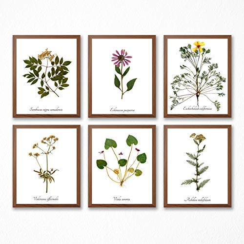Medicinal Herbs Print Collection # 2 - Set of Six Herbal Medicine Prints - FREE PRINT INCLUDED