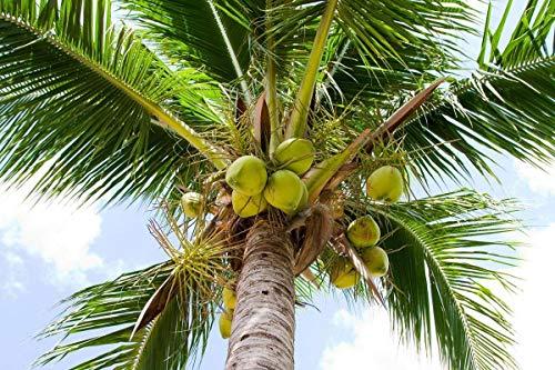 Organic Virgin Coconut Oil - 128 fl oz by allgoodsdelight365 (Image #5)