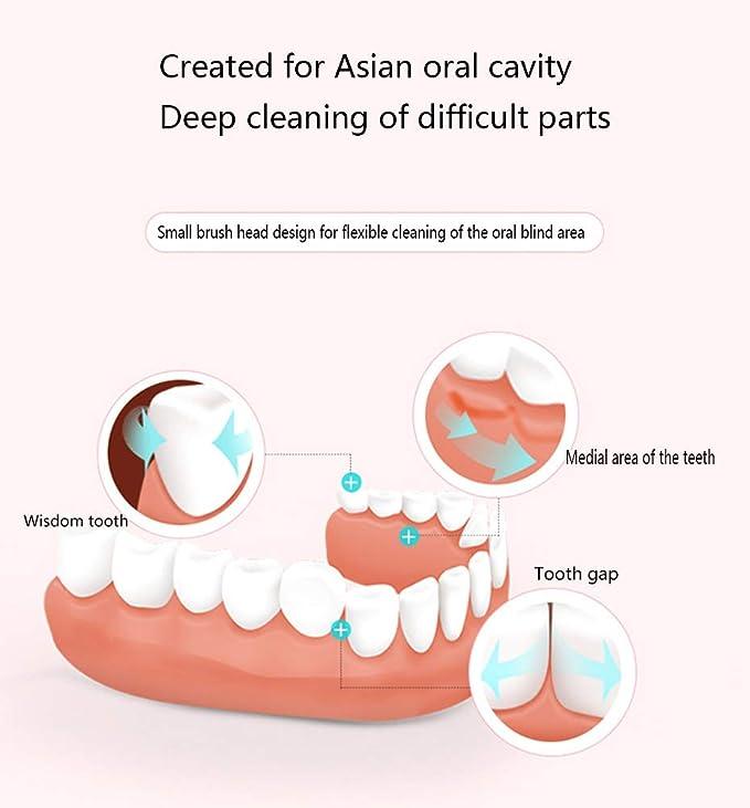 Cepillo de dientes eléctrico limpia a fondo las muelas, la batería seca cepillo dental sónico dura 60 días batería vida, adulto niños cepillo de dientes ...