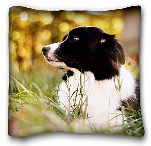 FFJPL Decorative Square Polyester Throw Pillow Case Animals Border Collie Spotted Dog Grass Cushion Cover 20x20 inch